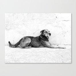 xela dog Canvas Print
