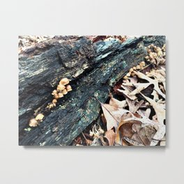 Truly Fall Metal Print