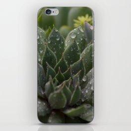 Rained on Cacti iPhone Skin