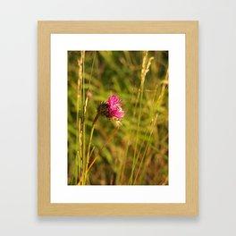 Carduus acanthoides plant, Dolomiti mountains, Italy II Framed Art Print