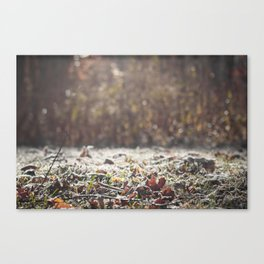 A Creeping Stillness Canvas Print