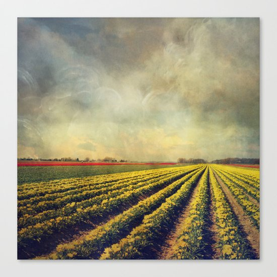 Chaos & Order - Field of Tulips Canvas Print