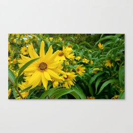 Bright Day bloom Canvas Print