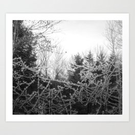 Wicked frost Art Print