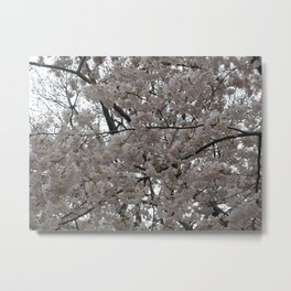 Tidal Basin Blossoms Metal Print