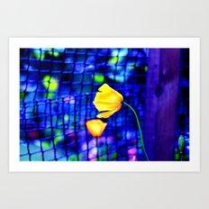 Yellow Poppies  Art Print