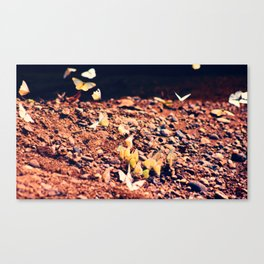 Butterfly park Canvas Print
