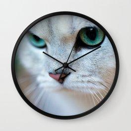British shorthair silver shaded chinchilla cat Wall Clock