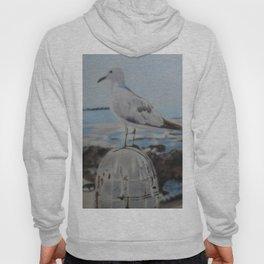Seagull Hoody