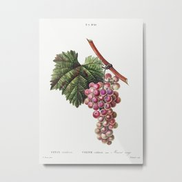 Vitis vinifera (Muscat rouge) from Traite des Arbres et Arbustes que lon cultive en France en pleine Metal Print