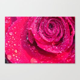 Spirals Of Rain Drops On A Red Rose Canvas Print