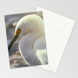 Concentrating Stationery Cards