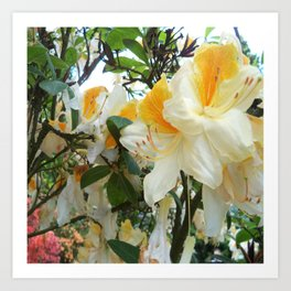 Flowers_Rhododendrons Art Print