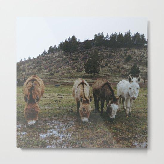 Miniature Donkeys Metal Print