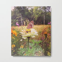 Spangled fritillary Butterfly Metal Print