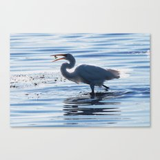 Great Egret Catch Canvas Print
