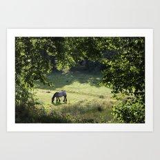 Horse in Meadow Art Print