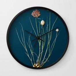 Vintage Allium Globosum Botanical Illustration on Teal Wall Clock