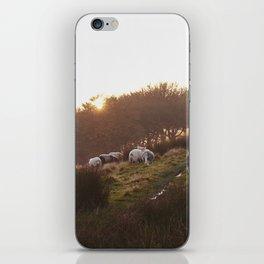 Sheep grazing on hillside at sunset. Derbyshire, UK. iPhone Skin