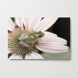 Treefrog on flower Metal Print