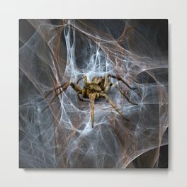 Spider In Web Metal Print