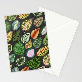 Prayer Plant Calathea Leaves 1 Stationery Cards