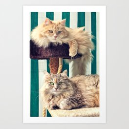 Siberian cats on the cat tree Art Print