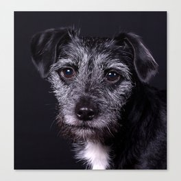 Pop the Dog Canvas Print