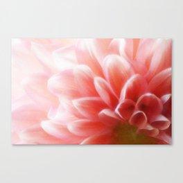 An Angel's Blush Canvas Print