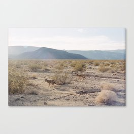 Panamint Valley Coyotes Canvas Print