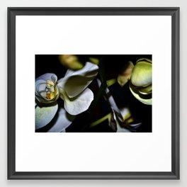 Noen Orchids Framed Art Print