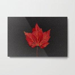 Maple leaf - Feuille d'érable Metal Print