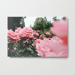International Rose Test Garden Metal Print