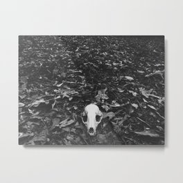 Raccoon Scull Metal Print