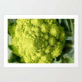 Romanesco Broccoli II - Kitchen Macro Vegetable Photograph Art Print