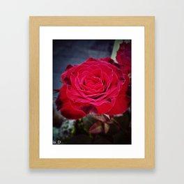 A red rose Framed Art Print