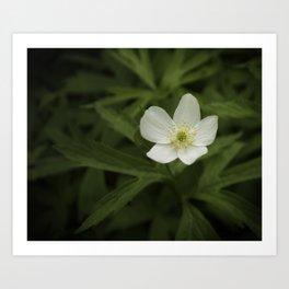 White Wild Flower Art Print