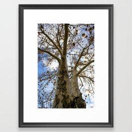 God's Wood Framed Art Print