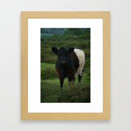 Belted Galloway Cow Framed Art Print