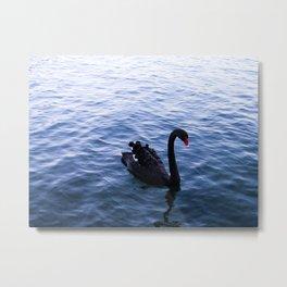 Lone Swan Metal Print