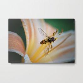 hoverfly macro Metal Print