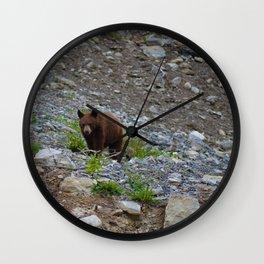 Black bear cub in Jasper National Park   Alberta Wall Clock