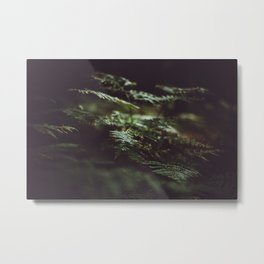 Fern in the shadow Metal Print