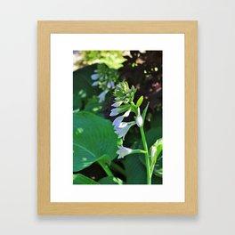 Hosta Flowers Framed Art Print
