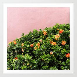 California Flowers on Pink Art Print