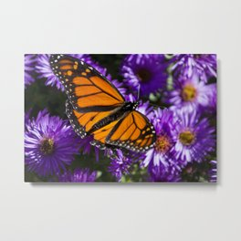 Monarch Butterfly 1 Metal Print