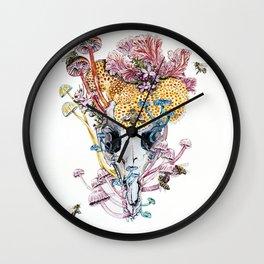 Petrogale Xanthopus Xanthopus + the Visitors Wall Clock