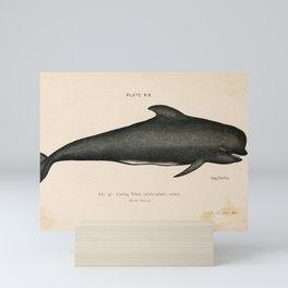 W Sidney Berridge - A Book of Whales (1900) - Figure 37: Caa'ing Whale or Long-finned Pilot Whale Mini Art Print