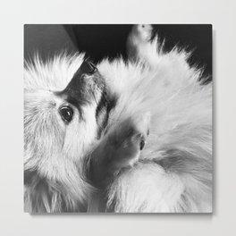 Just Love Pomeranian Metal Print