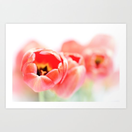 Tulips, a little less fresh... Art Print